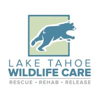 lake tahoe wildlife care